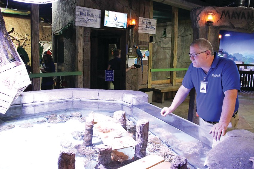"SeaQuest Littleton general manager David Slater surveys a ""touch tank"" at the interactive aquarium in Southwest Plaza Mall on Oct. 4. Slater, who took over the controversial aquarium a year ago, said he hopes to rebuild SeaQuest's reputation after numerous animal welfare violations."