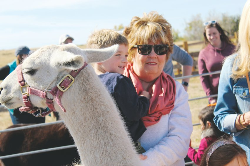 Weston Ibscher, 4, with grandmother, amid the llamas at the petting zoo at Schweiger Ranch Oct. 5.