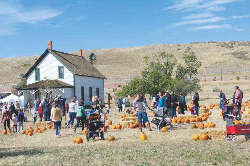 Schweiger Ranch hosts its annual fall festival every year at the start of October. Hundreds turned out for pumpkin-picking, a petting zoo, wagon rides and other autumnal activities Oct. 5.
