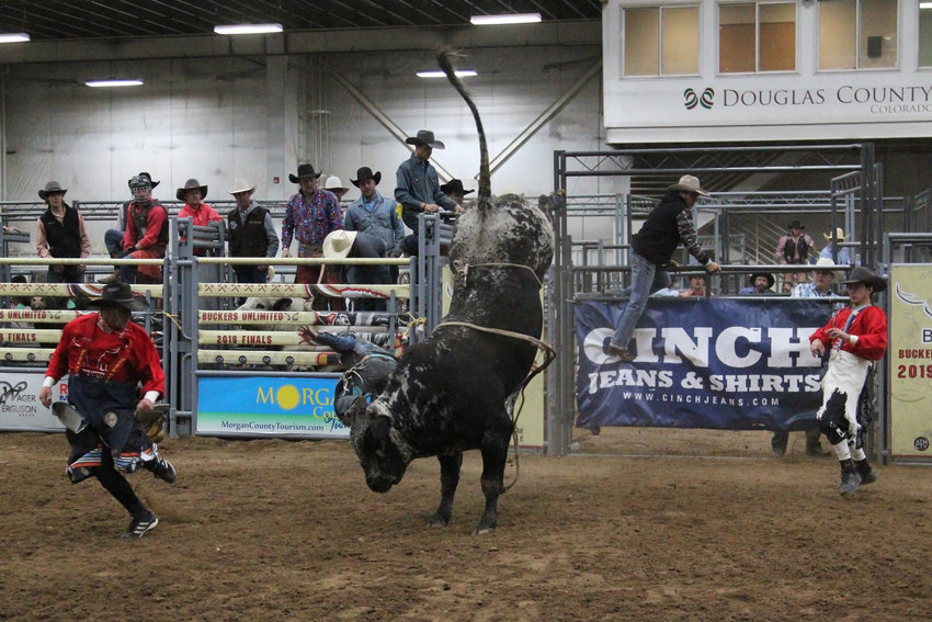 Bull riders weren't the only ones scored during the Buckers Unlimited competition. Bulls were also scored on their performance.