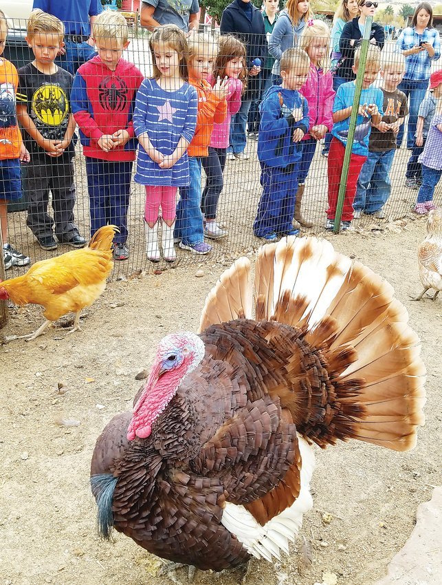 Children visiting the CALF ranch look at one of their turkeys. The ranch also has donkeys, goats and chickens.