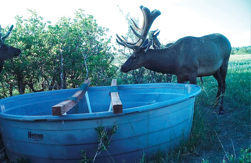 A trail camera photographs two elk in the Backcountry during June.