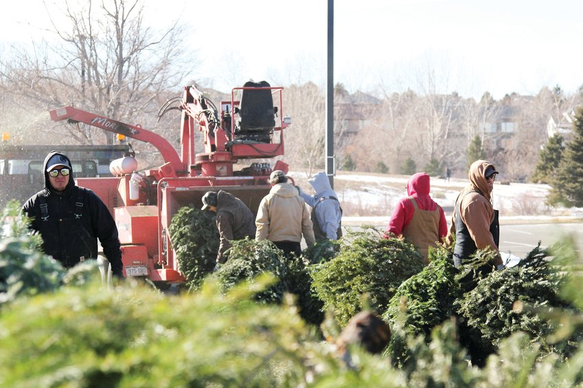 Douglas County staff recycle Christmas trees in Highlands Ranch on Jan. 3.