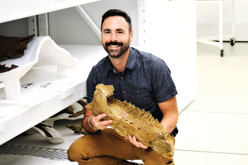 Paleontologist Joe Sertich, curator of dinosaurs for the Denver Museum of  Nature and Science, holds a fossilized jawbone dug from the ground in Thornton two years ago. The bones belong to a Torosaurus -- a close cousin to a Triceratops -- that lived in Colorado during the late Cretaceous period 66 million years ago.