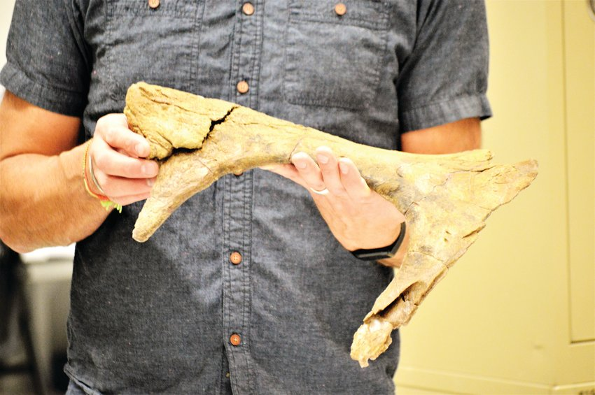 A closer look at the 66 million year old jaw bone from Thornton fossils held by paleontologist Joe Sertich.