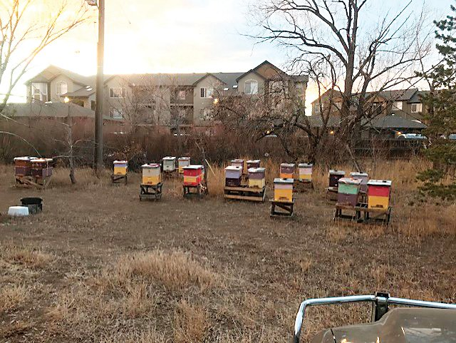 A reported bee-napping turned out to be misunderstanding in Northglenn. Thousands of bees housed in 30 hives at the Karl's Farm area in Northglenn were moved without the bee-keeper's knowledge sometime between Feb. 7 and 9, but efforts are underway to get the hives and any surviving bees back to the owner.