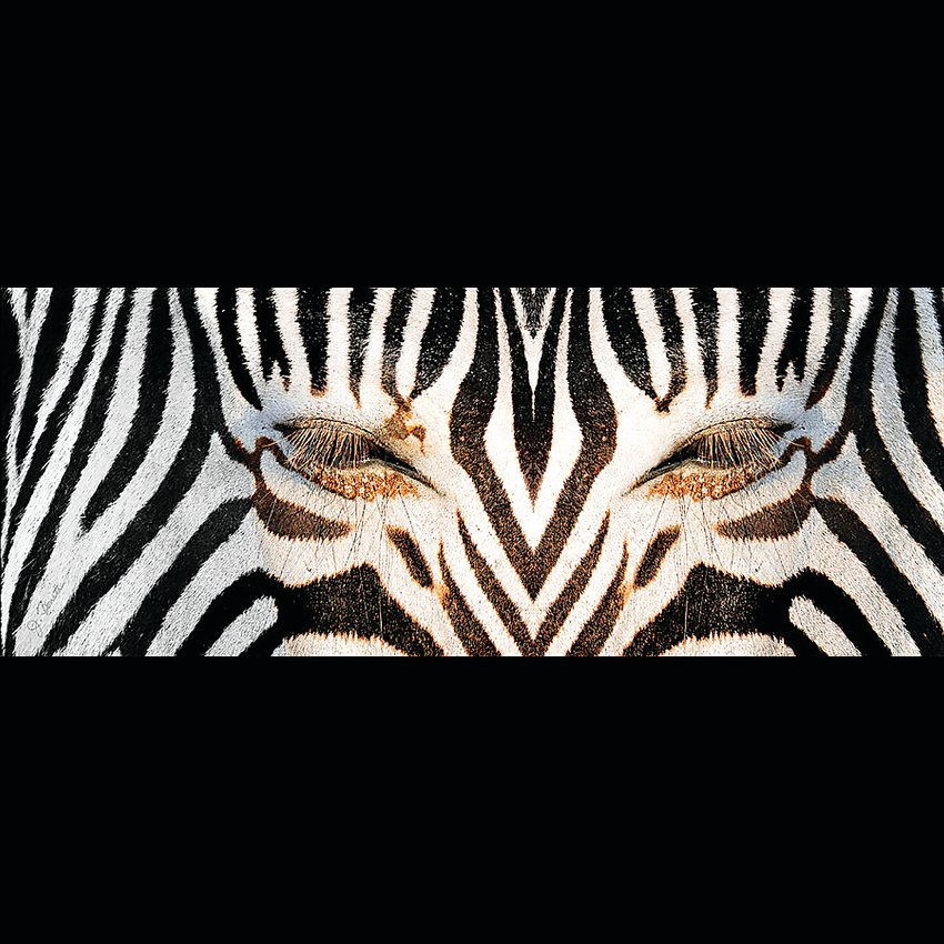 """Synthetic Zebra"" photograph by Joe Bonoto is included in ""Animals Tame and Wild"" at the Depot Art Gallery."