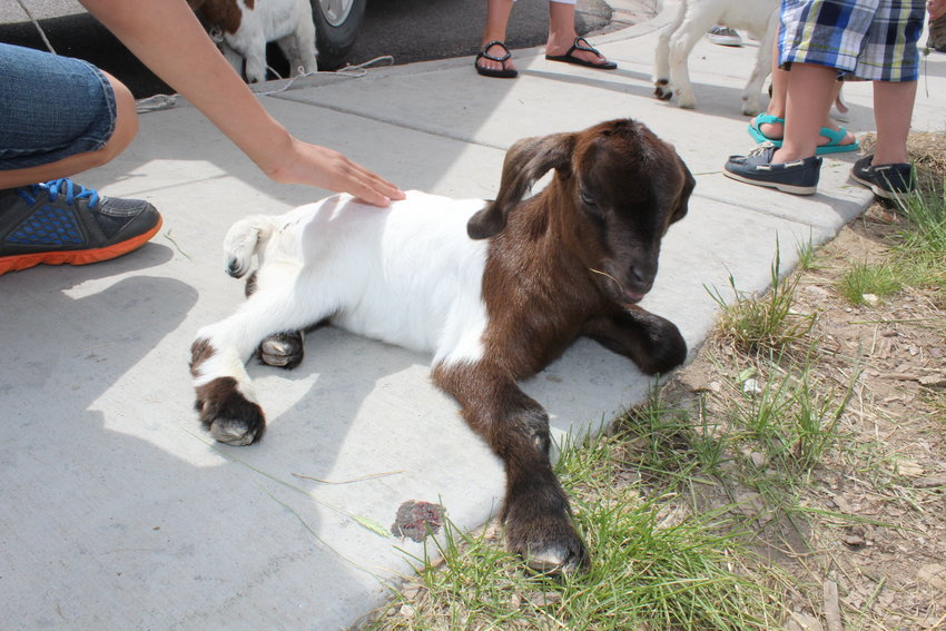 Anythink Library Director Pam Sandlian-Smith said she does not know if the goats will return to Anythink's branches this summer. The library has been bringing in a herd of goats to each of the branches in June.