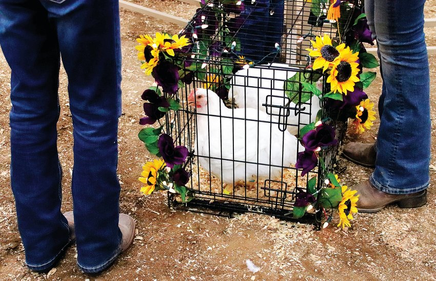 Some kids participating in the livestock sale decorated their animals or their containers. This chicken cage was decorated with flowers and string lights.