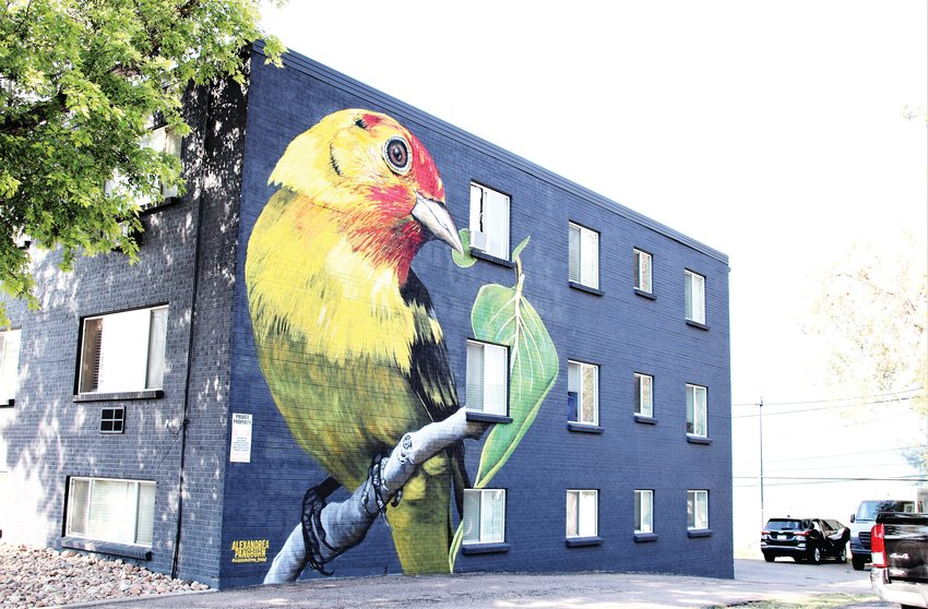 Artist Alexandrea Pangburn painted the north facing side of 7155 Hooker Street with this three story tall finch to kick off Babe Walls, an effort to bring women artists to the decorate buildings in Westminster Aug. 13.