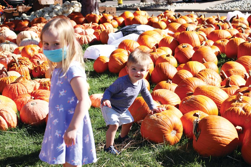 Willa Hiatt, 4, and brother Elliot, 1, search for their pumpkins at the St. Luke Pumpkin Patch in Highlands Ranch Sept. 29.