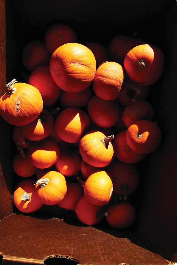 The pumpkin patch has a variety of options, including classic, white, small and unusually shaped pumpkins.