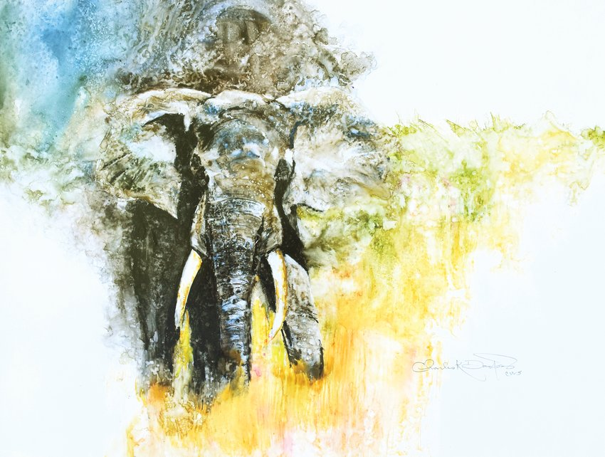 "Chuck Danford's ""Pride of Africa"" watercolor took first place in the ""This is Colorado"" show."