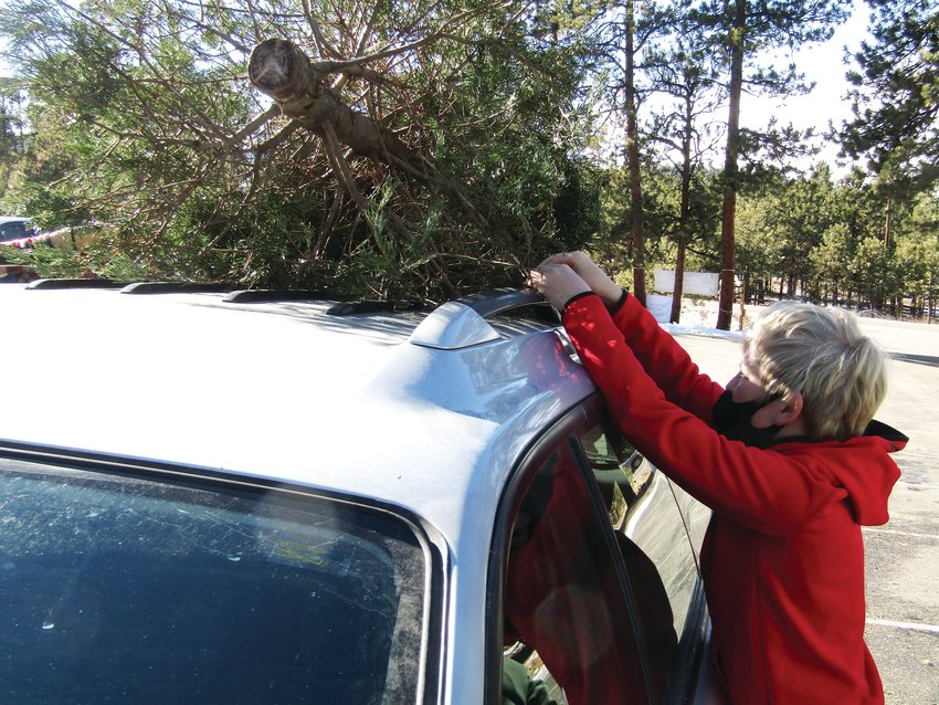 Weston Thorne prepares to remove a Christmas tree from the top of a car and add it to the pile ready for mulching.