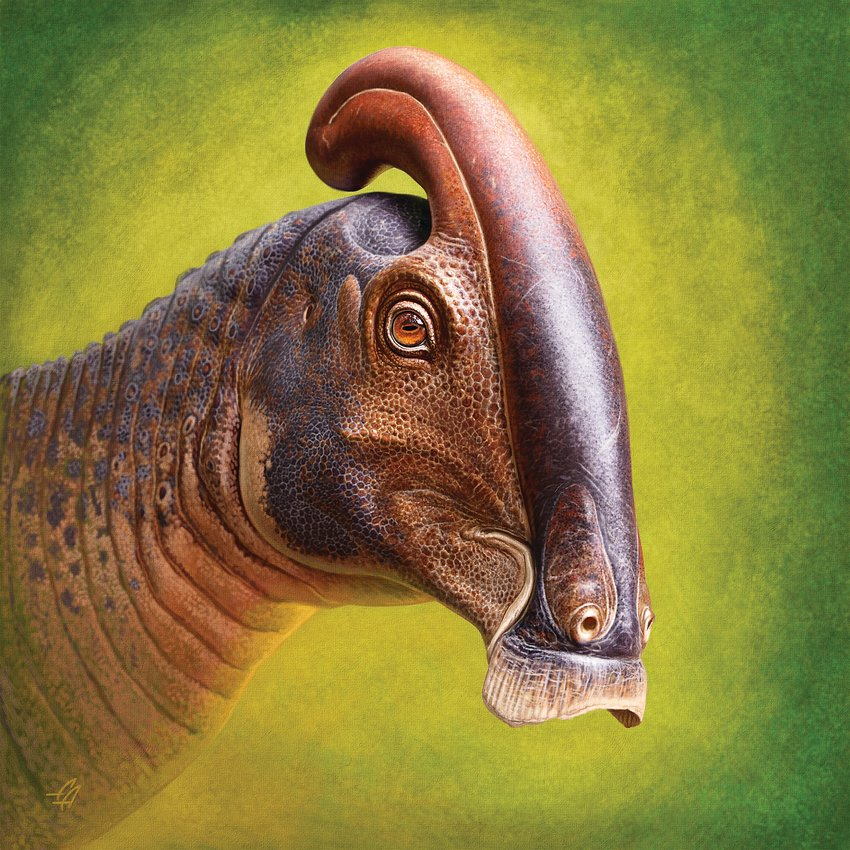 Life reconstruction of the head of Parasaurolophus cyrtocristatus based on newly discovered remains.