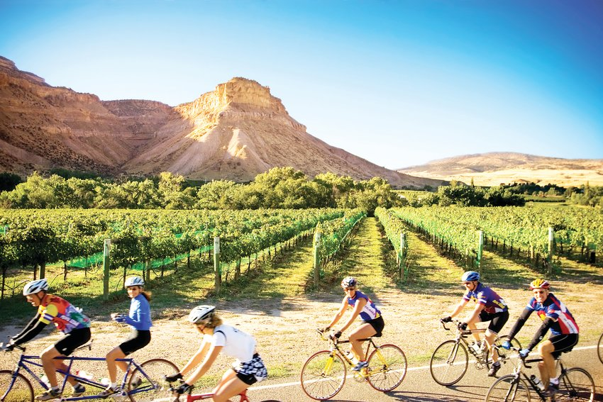 "A group cycling through the vineyards in Palisade, ""wine country."""