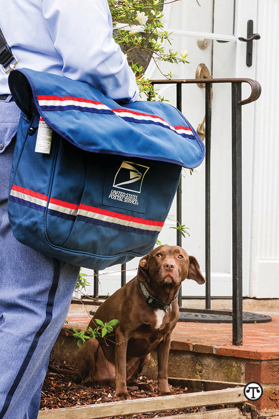 Contain your canine, keep carriers safe.