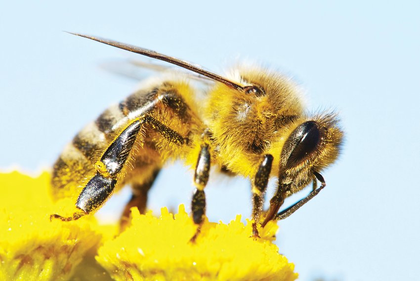 On Earth Day, April 22, Hudson Gardens will have a beekeeper open house from 3 to 6 p.m.
