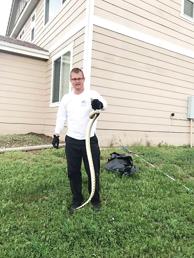 Isaac Merten of Castle Rock Pest Control holds up a six-foot bull snake he captured earlier this month.