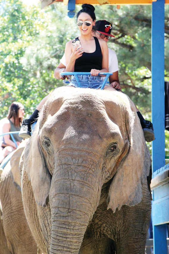 Colorado Renaissance Festival attendees ride an elephant in 2017. A bill introduced in the Legislature would ban the use of exotic animals in traveling shows.