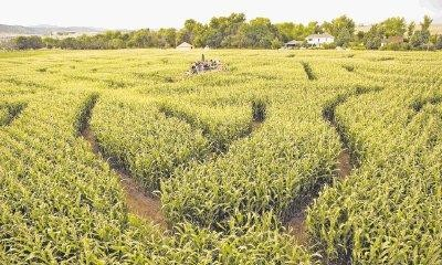 Get Lost In The Corn Maze