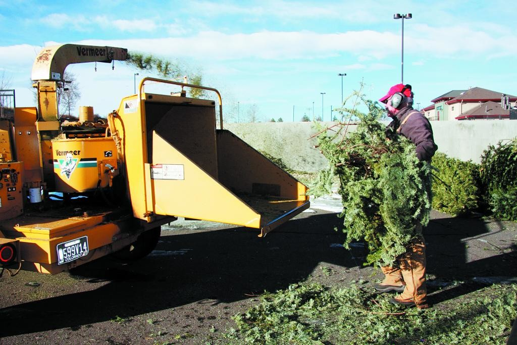 A city employee feeds a Christmas tree into the machine last year as Englewood offered the opportunity to turn trees into mulch instead of putting them in the trash. The program will be conducted again this year during the month of January.