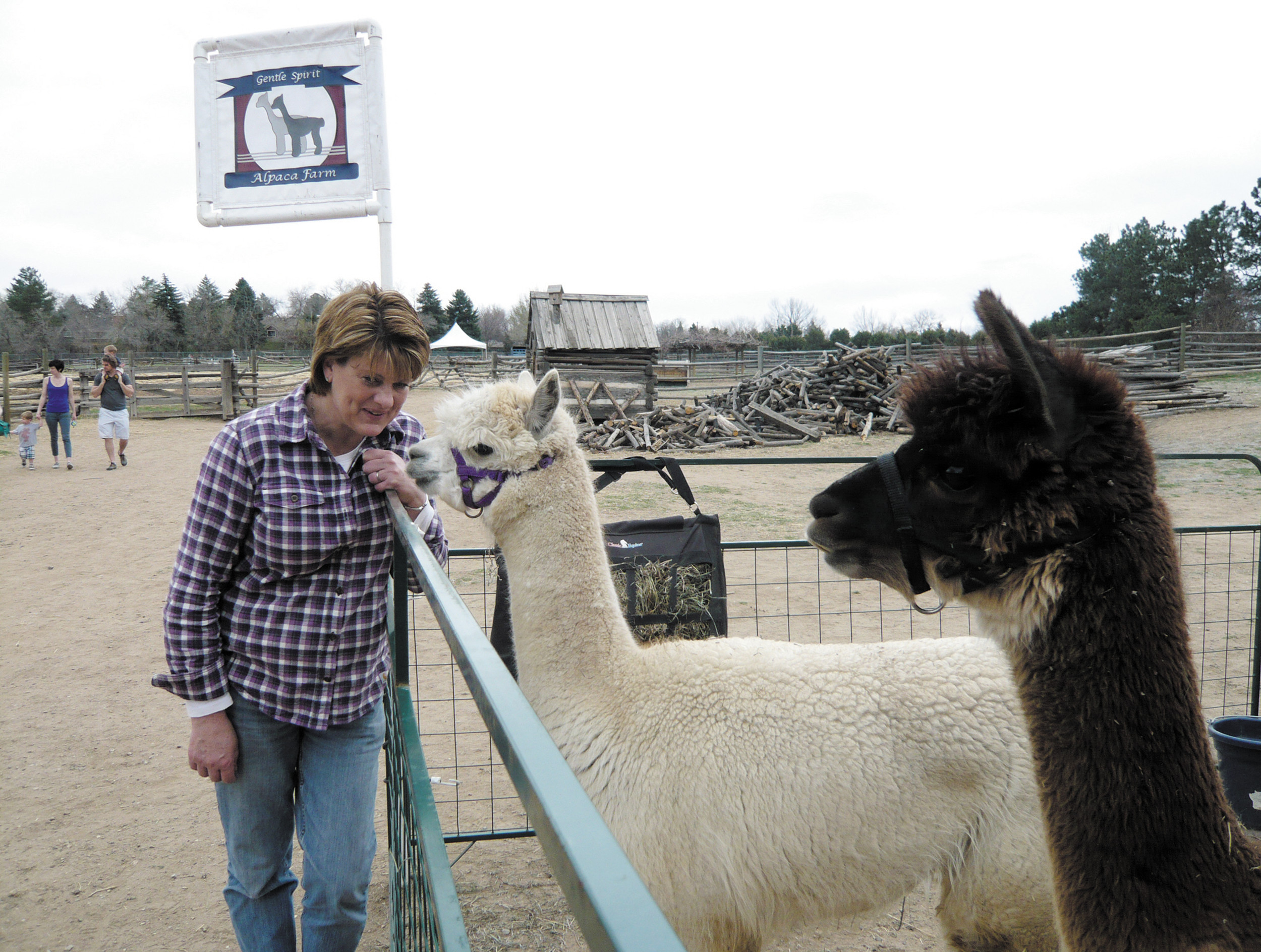 Nancy Simmons Holloway of Gentle Spirit Alpaca Farms in Wiggins brought an alpaca and a paco-vicuna to the Fiber Festival April 12.