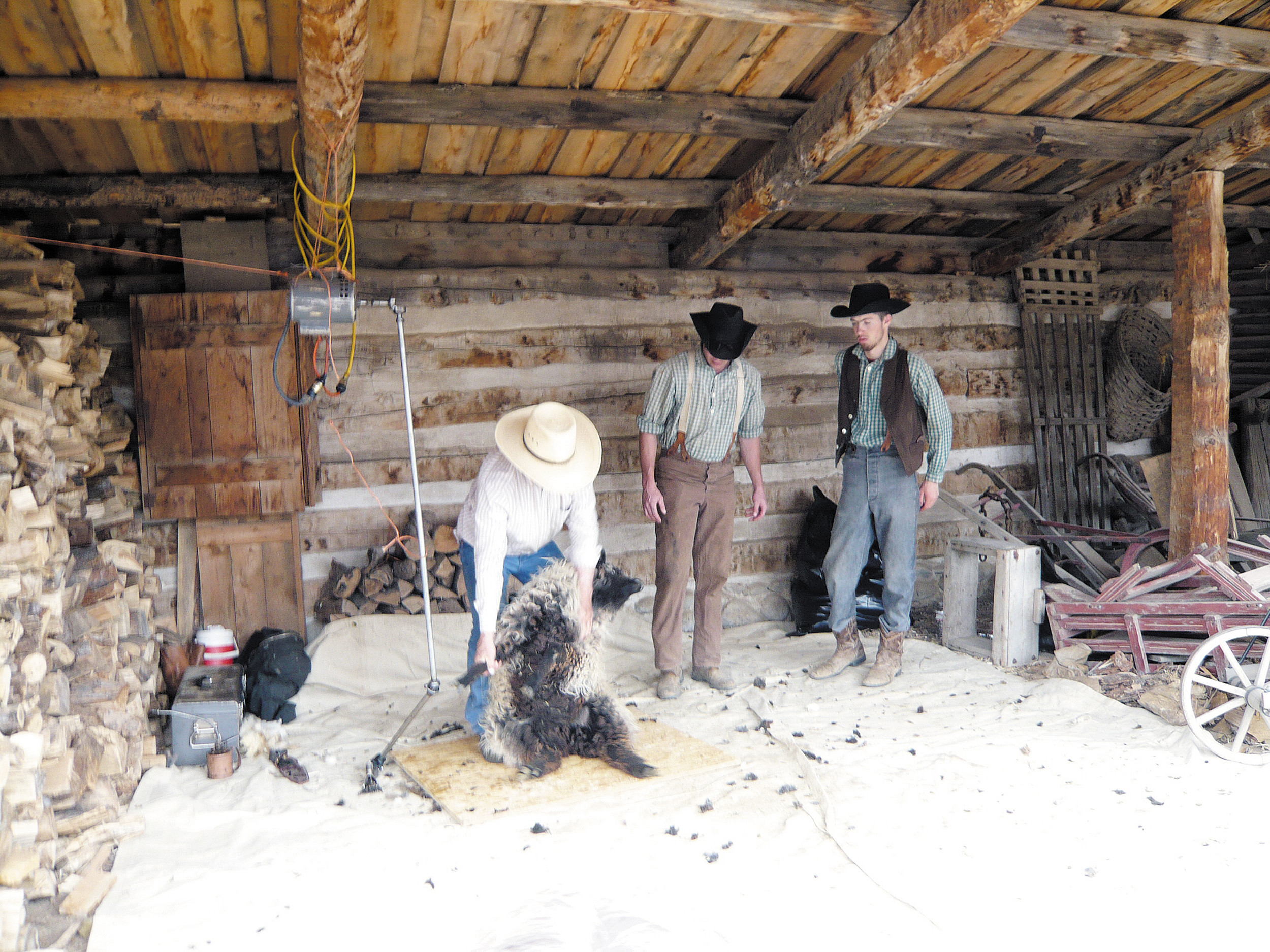 Sheep Shearing was an annual spring ritual on 1860s Littleton farms-- although farmers did not have the electric shears used on April 12 at the Littleton Museum.