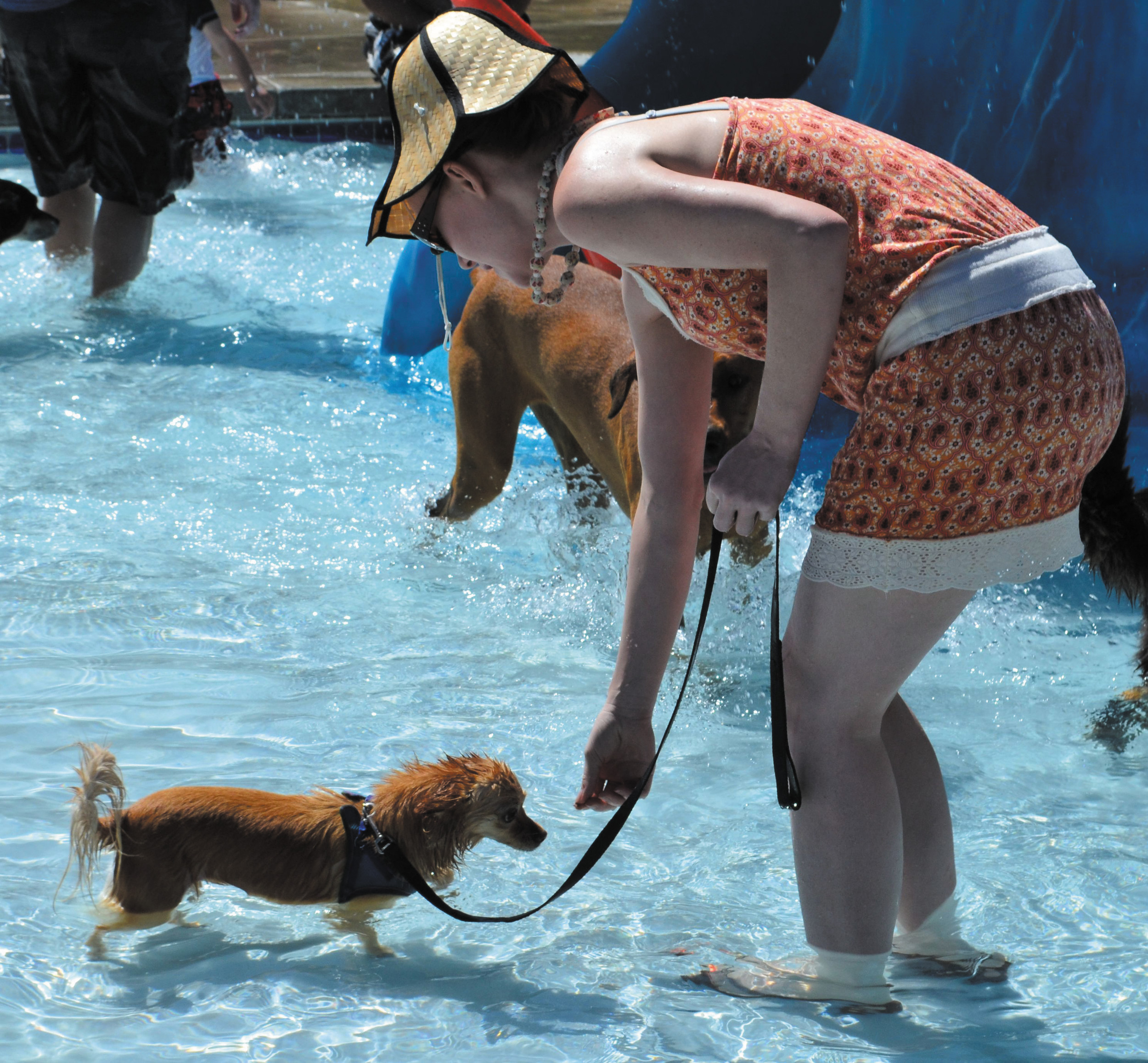 Wading through the shallow end, 2-year old, Rainbow Sparkle Pants, slowly begins to enjoy swimming with her owner.