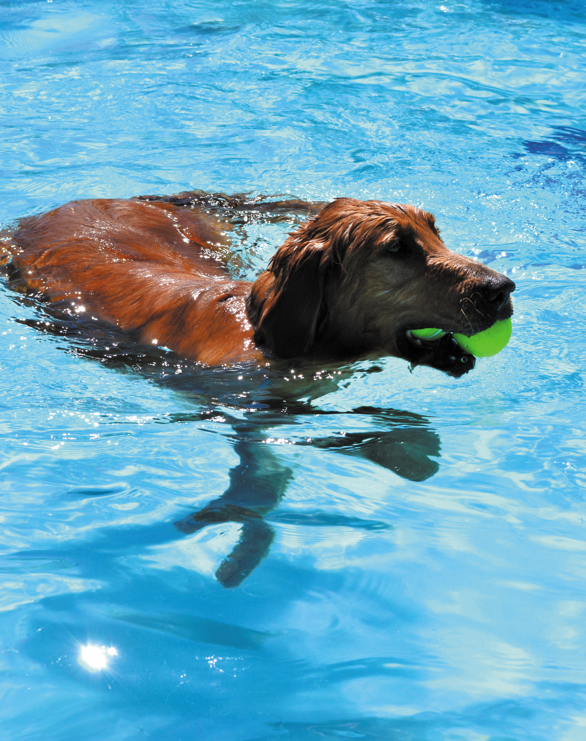 One is never enough for 9-year old, Barney, who caught two tennis balls while wading through the pool.