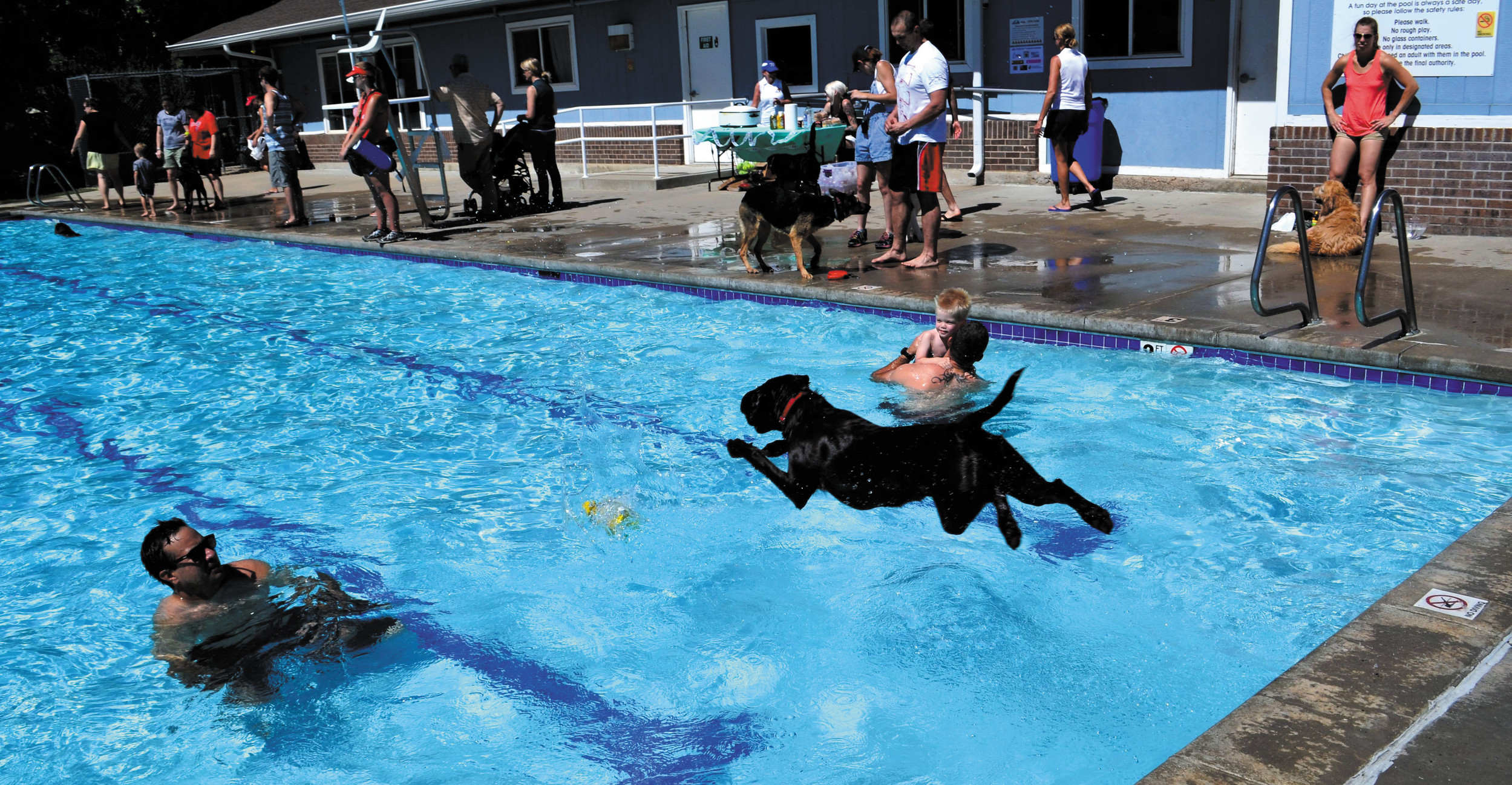 Poncho leaps into the Lake Arbor Swimming Pool full force to go after his flying tennis ball.
