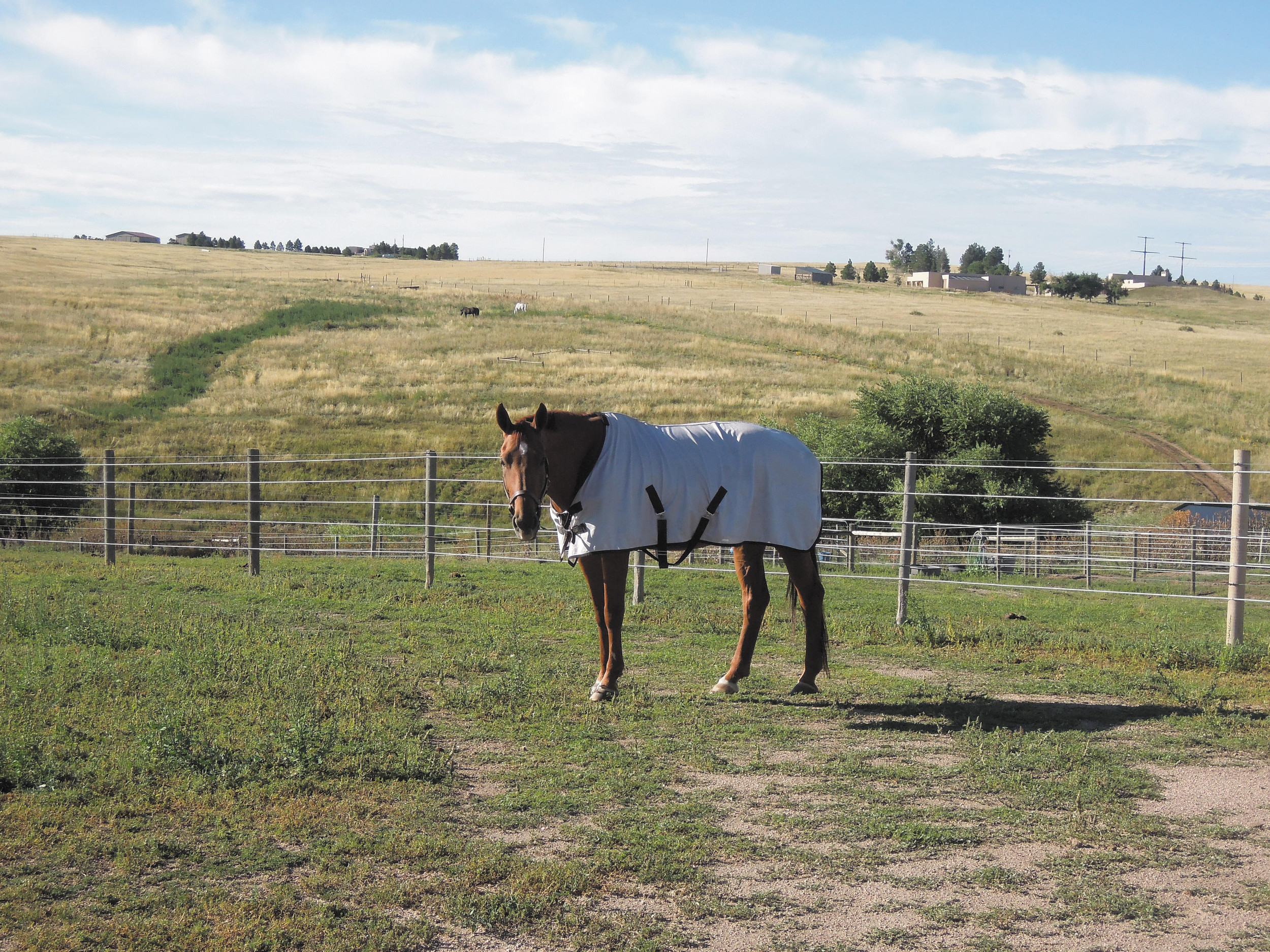 A horse at Wood Run Farm in Castle Rock wears a fly shield to protect against flies who carry the vesicular stomatitis virus that has spread across Colorado.