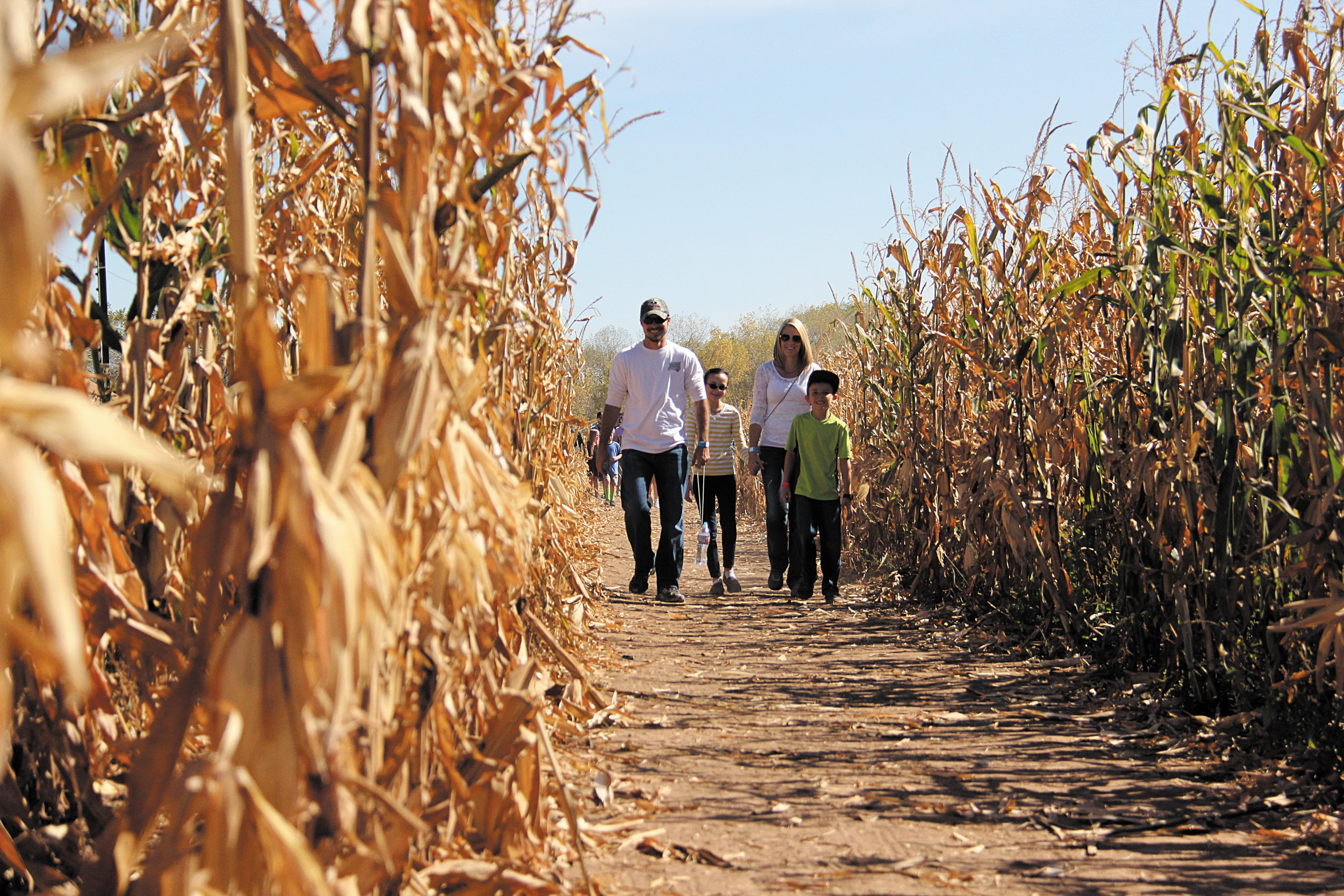 Get Lost At Chatfield Farms
