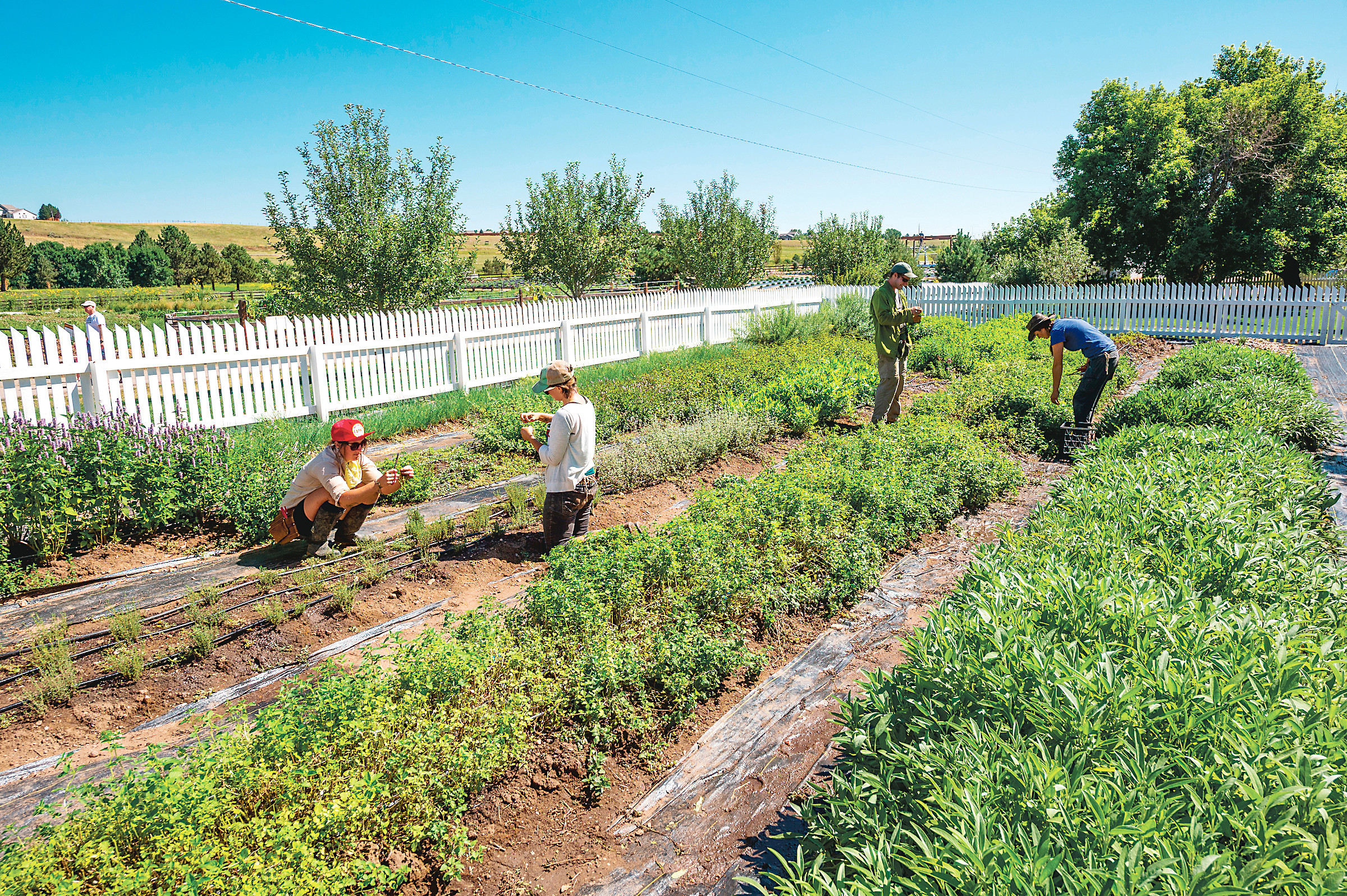 How Food Can Transform Community