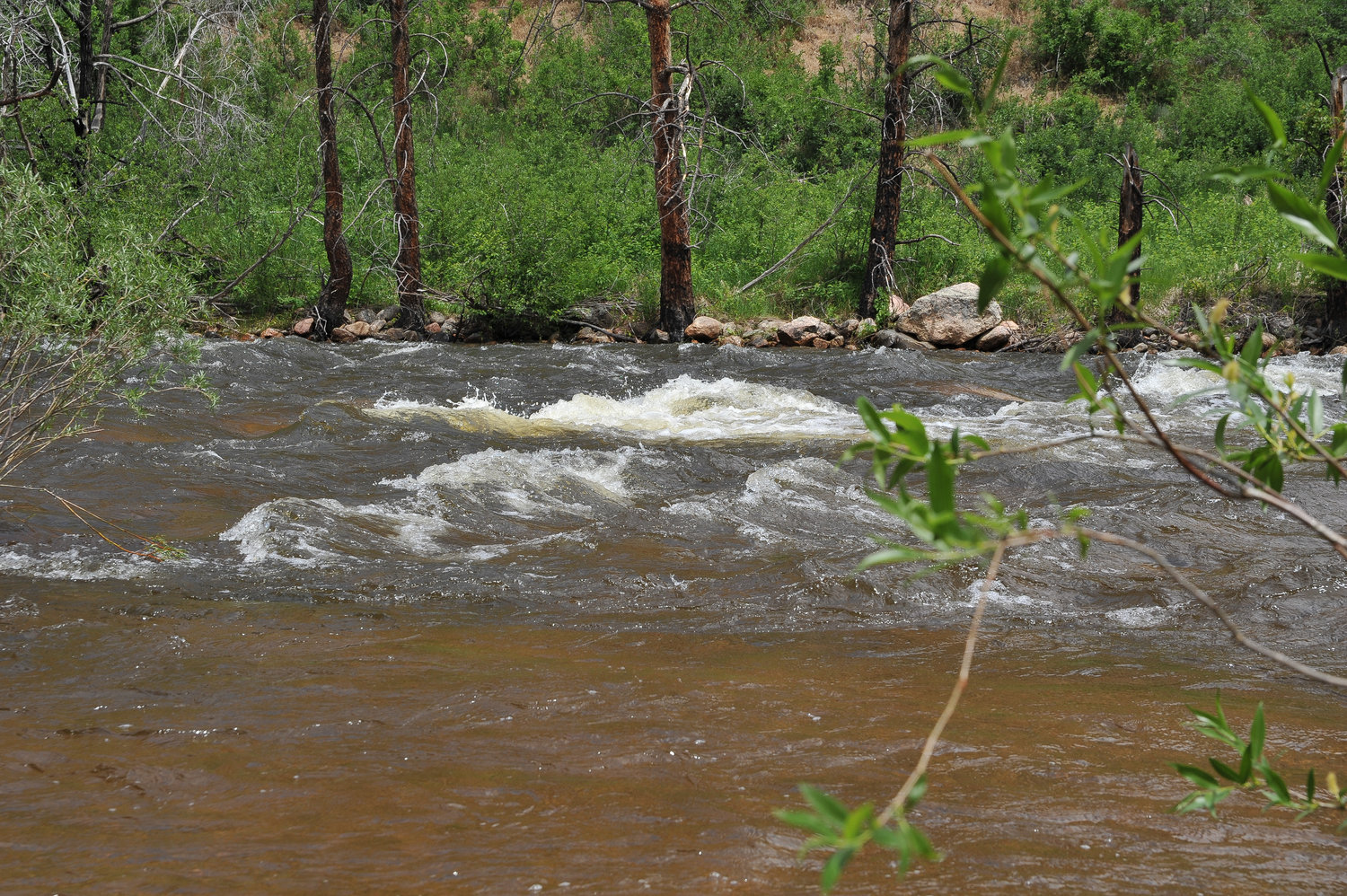 A view of the Cache La Poudre as it flows through Larimer County. A Weld County Commissioners decision is making it more difficult for the City of Thornton to bring water it owns from the river down to Thornton.