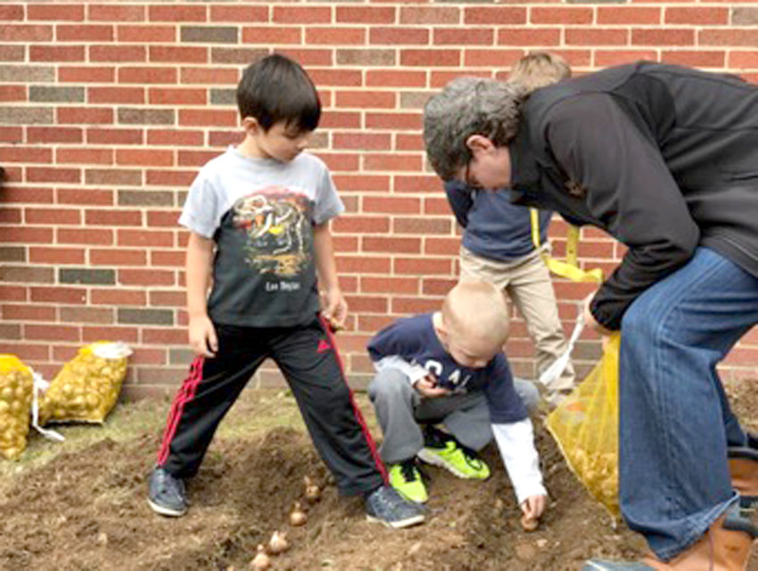 SCHOOL COUNSELOR AND RED Ribbon Week Coordinator, Mrs. Jenne Wilson, right, helped kindergarteners Silas Graham, left, and Kolton Collette place daffodil bulbs in the ground at Hopewell.