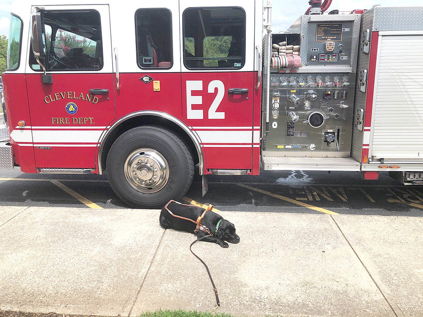 WIGGLES, the guide dog for Christy O'Dell, recently visited the Cleveland Fire Department.