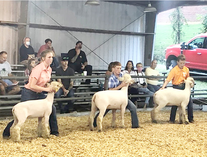 Emma Cross, Zeb Ratcliff and Brody Pratt competed in the Southdown Breeding Ewe Class.