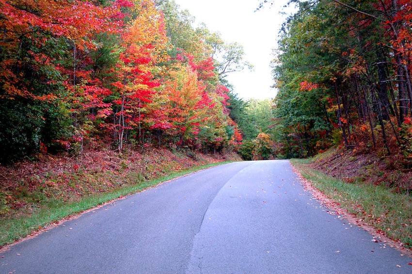 THE OCOEE SCENIC BYWAY (Forest Service Road 77) offers a view of beautiful fall colors on each side of the road.