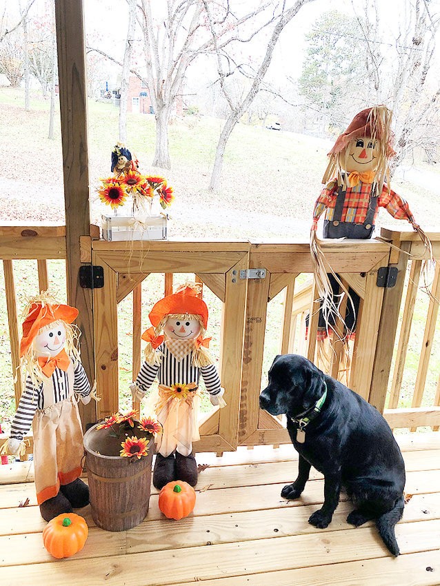 CHRISTIE O'DELL'S guide dog Wiggle sits on a porch with fall decorations of flowers, pumpkins and scarecrows.