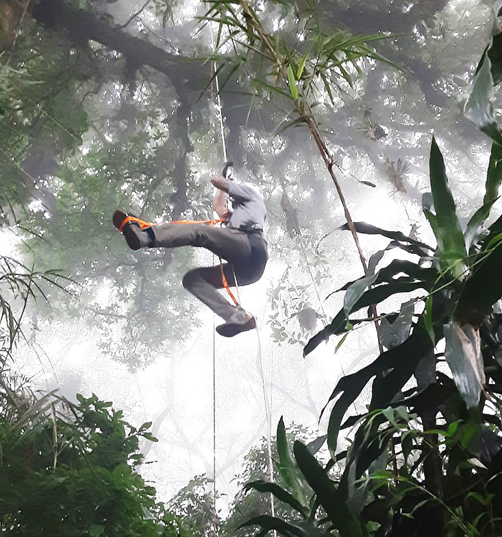 Dylan Katina ascends a large tropical oak in Cloud Forest near Vara Blanca.