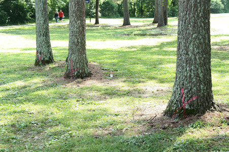 SEVERAL TREES in Tinsley Park have been marked for removal for the development of the upcoming dog park. Banner photo, HOWARD PIERCE