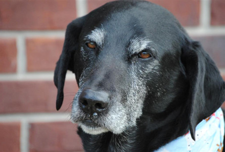 THE SECOND of the original dogs in the Helping Paws Healing Hearts therapy program passed away on Friday. Daryl and his brother, Larry (who died in April), helped their owner, Amy Hicks, in the program that included not only therapy but also grief counseling for children and others following tragedies.