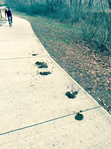 WALKERS, JOGGERS and bicyclists on the Cleveland/Bradley County Greenway had to dodge a mess left on the pavement by horses over the weekend. A number of complaints were received by Greenway board members and the Cleveland Parks and Recreation Department.