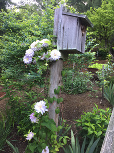 At the Taylor home, a birdhouse is nestled in the garden of natural foliage and native tree specimens. The Magnolia Garden Club toured the Taylors' garden during its April meeting.