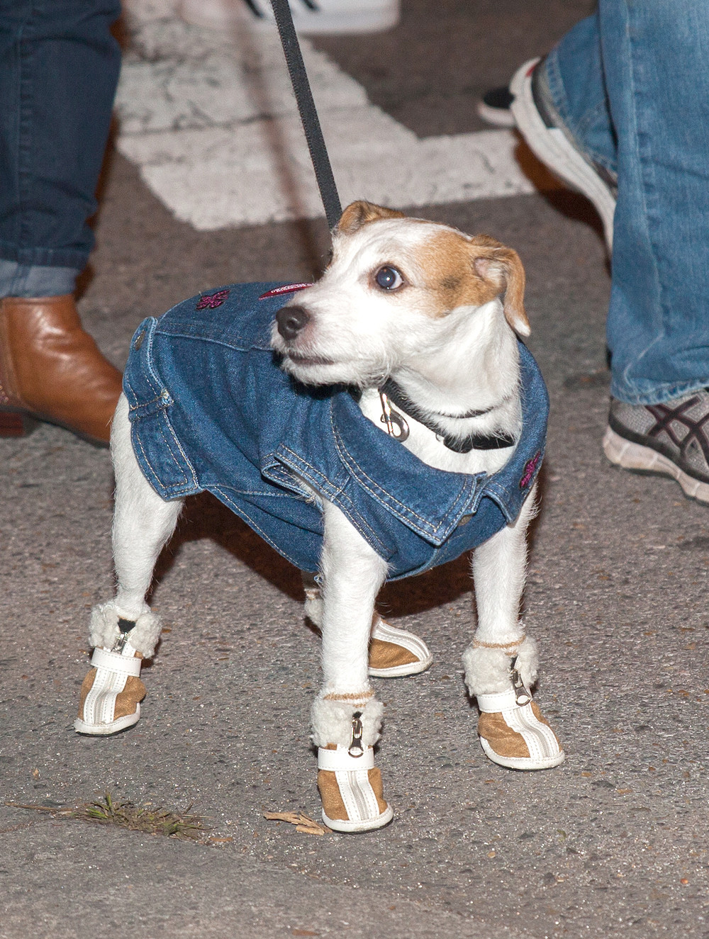 THIS PREPARED POOCH came to the Block Party ready to stay warm and enjoy the night.