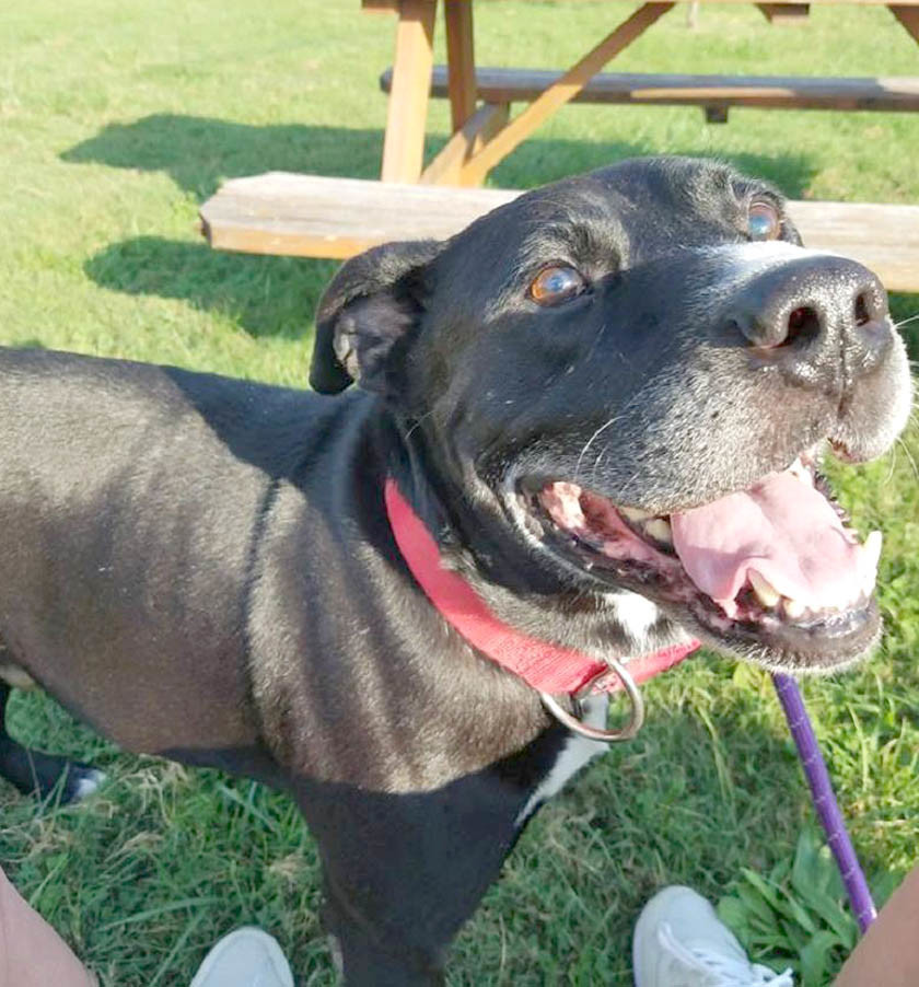 Taylor, a 7-year-old, black 