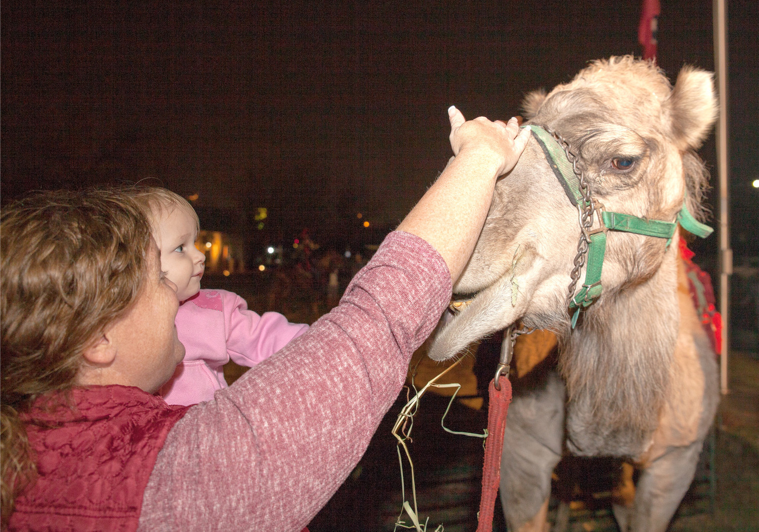 KAREN BROTHERTON, left, and little Paisley Rhoden, center, pet one of the camels during the nativity event Thursday night.