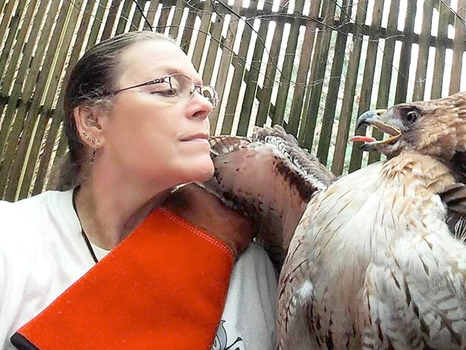 "Raptor specialist Alix Parks works with one of her rescued ""patients."""