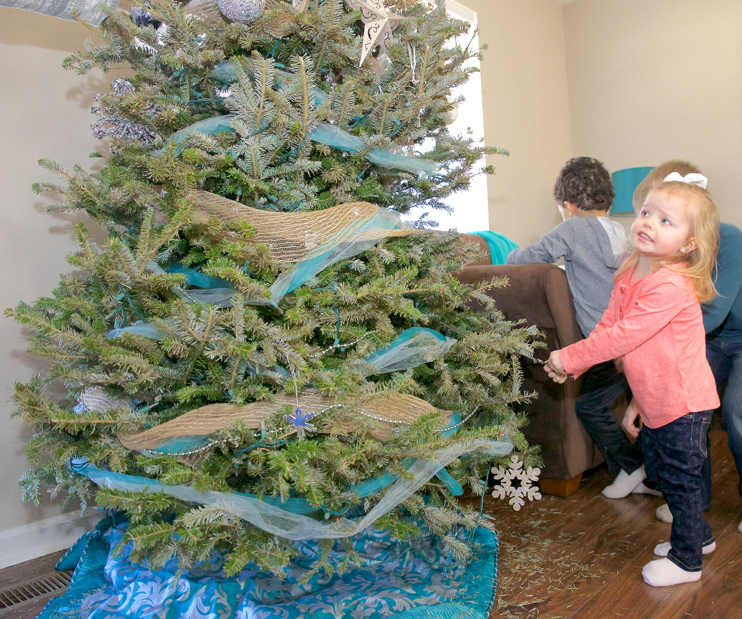 LITTLE CORALEE BAUM surveys the family tree for any remaining Christmas ornaments to be removed before this tree can be delivered to a Chipping of the Green collection site where it will be hauled away for shredding, and converted into an aromatic mulch. The mulch is given away free of charge.